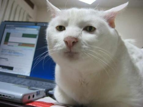 serious-cat